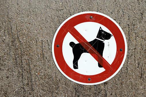 Hunde auf Friedhöfen, Kolumne
